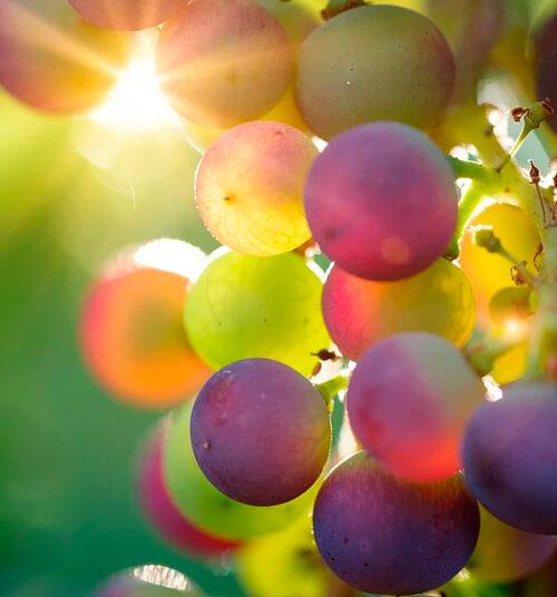 vinos-del-arlanza-en-lerma